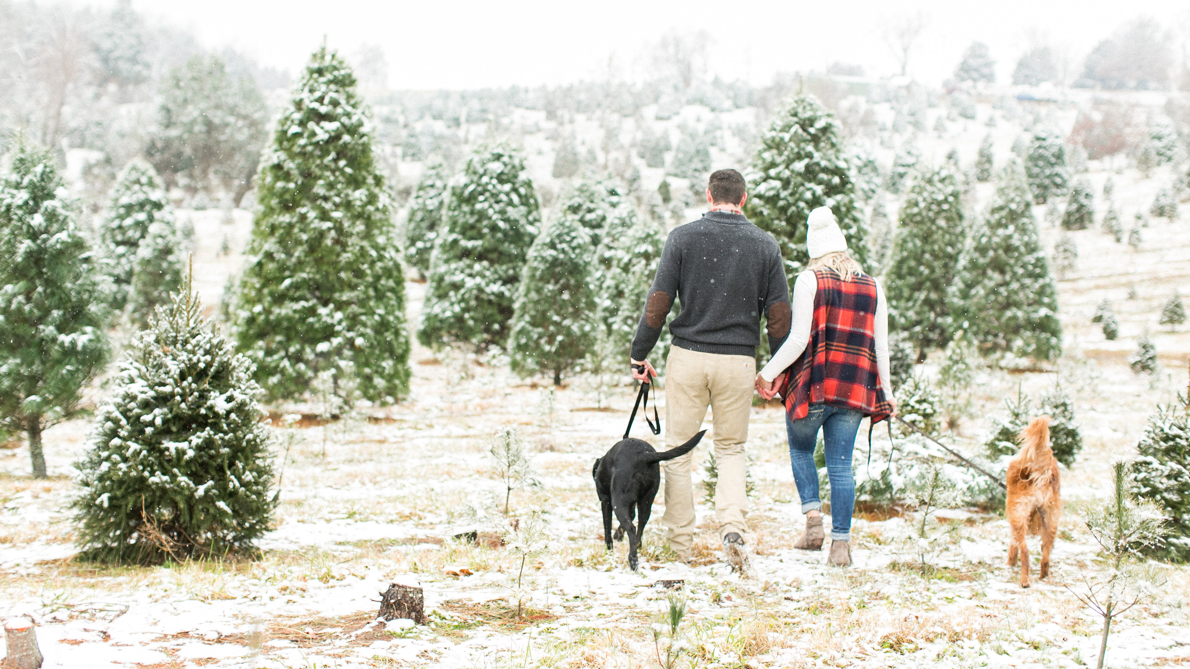 belmont_christmas_tree_farm_engagement-jessica_ryan_photographer