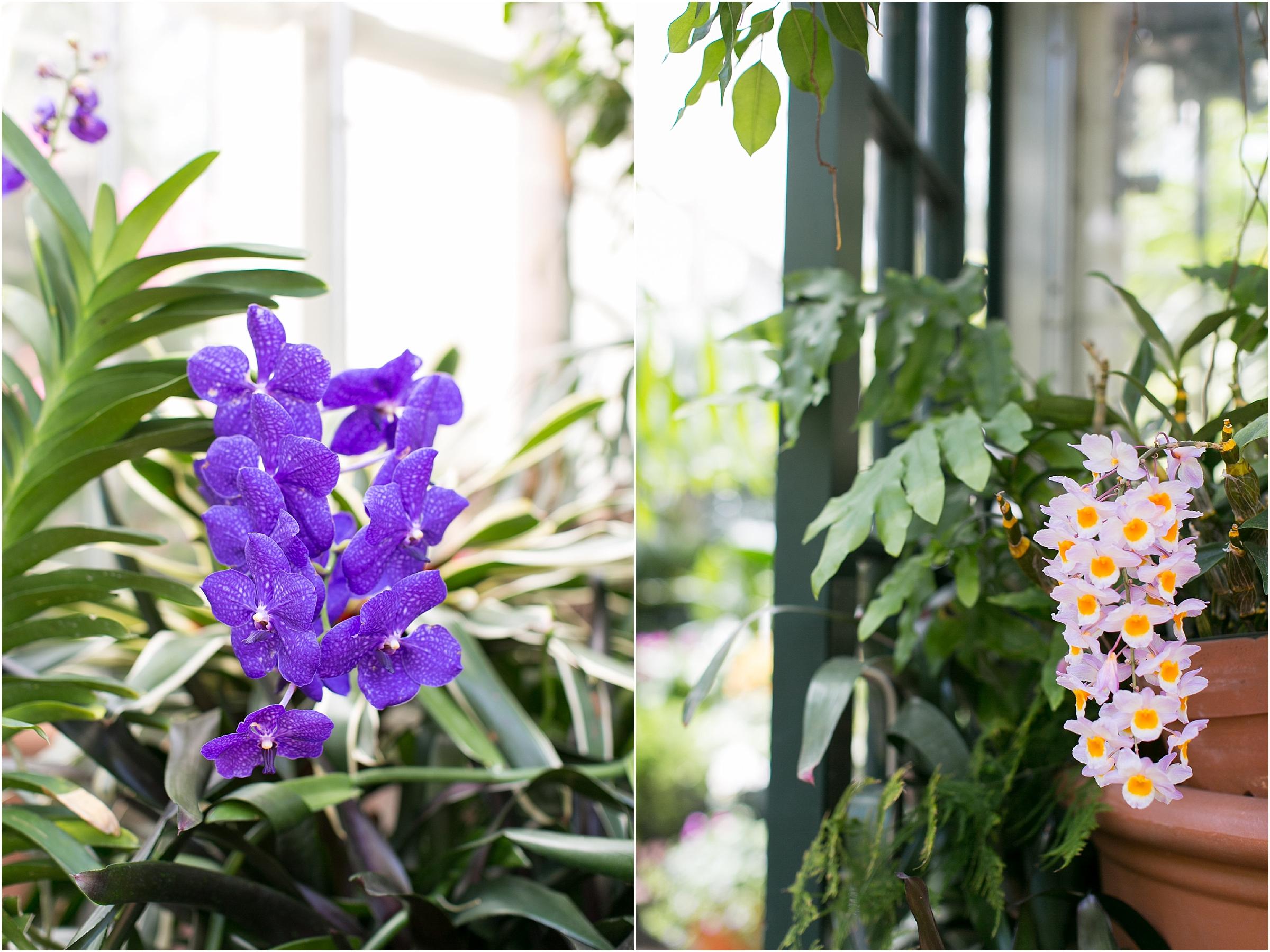 the Biltmore in Asheville North Carolina wedding greenhouse garden