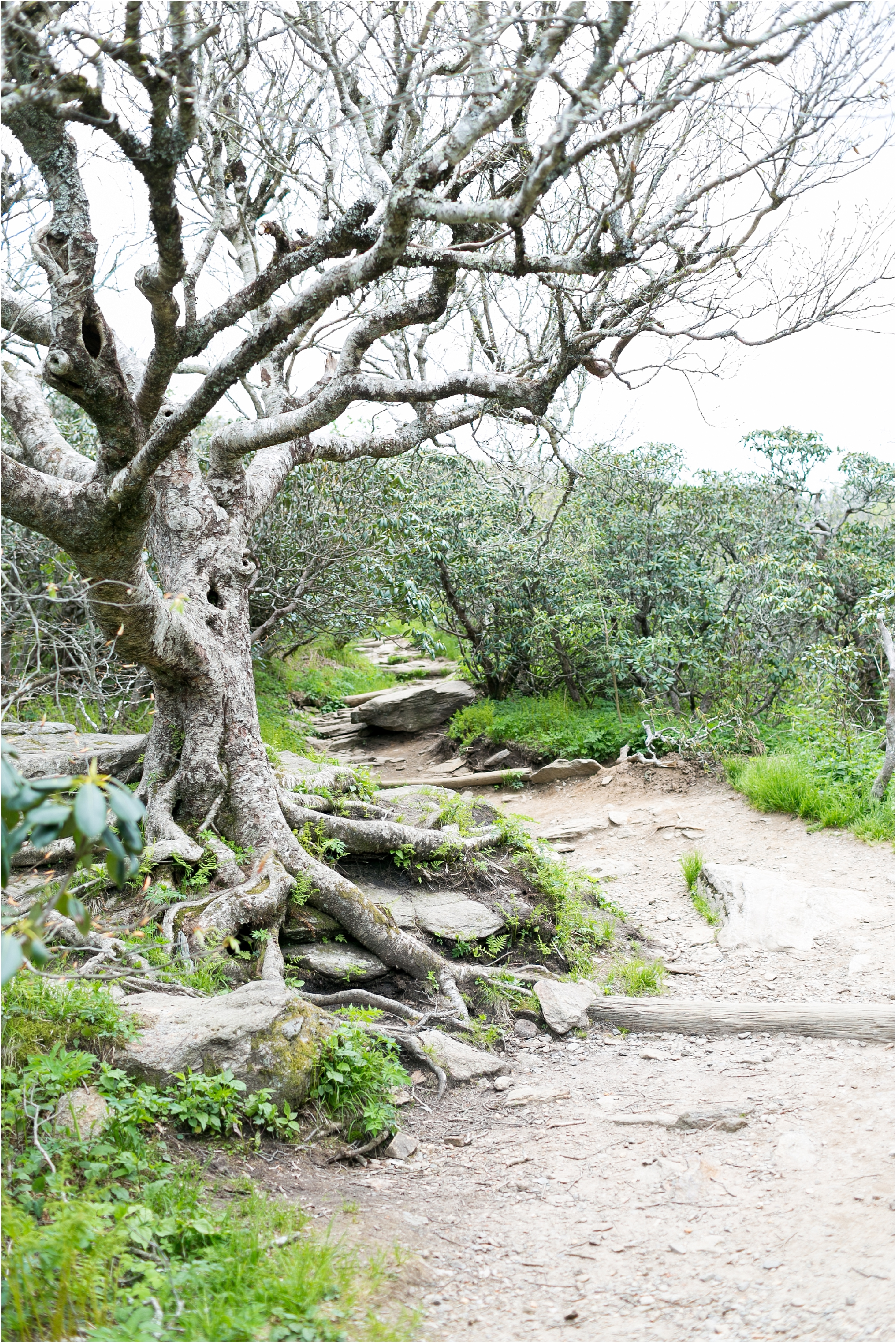 asheville north carolina honeymoon wedding photographer craggy gardens hike craggy pinnacle trail